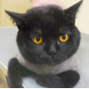 Стрижка кошек в городе минске.