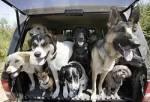 Как собака в Беларусь бегала